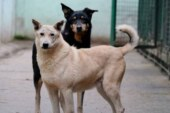 В Улан-Удэ собаки напали на девятилетнюю девочку